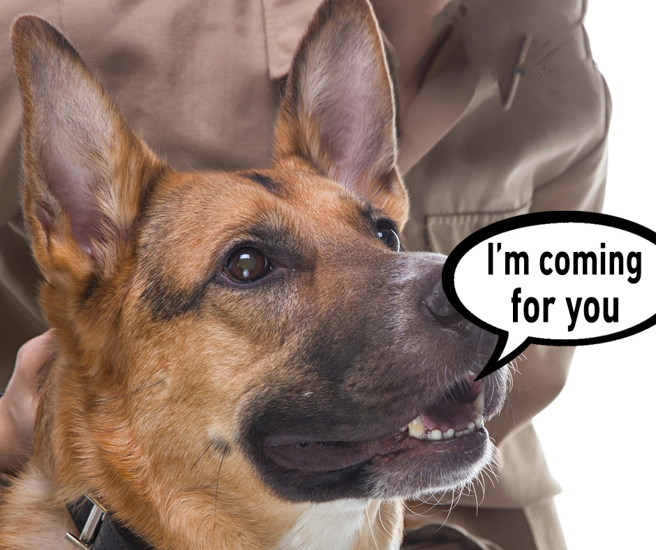 sniffer dogs pest control