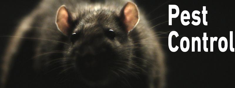 pest control rats uk