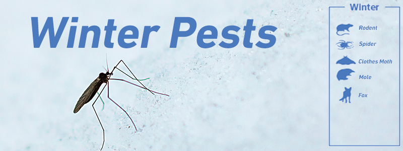 winter pests banner